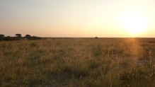 Sunset over the bushveld