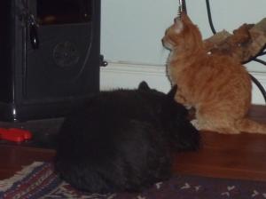 Missy and MacTavish keep warm by the wood stove
