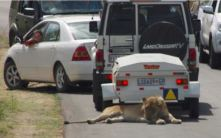 Trailers also make good emergency lion-shade awnings (courtesy of www.ventertrailers.co.za)