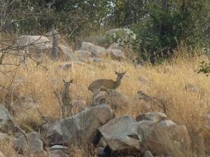 Gonareazhou National Park (68)