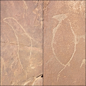 Twyfelfontein sea animals