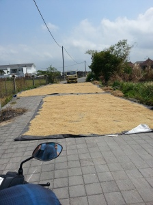 Rice harvest... maybe driving over it helps to remove the husk?