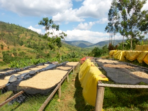 Coffee drying racks in Rwanda (courtesy of http://www.theadventuresofamelia.com/this-is-rwanda/)