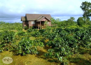 One of the coffee farms where Hester and Jonas source their beans